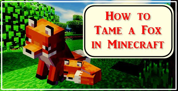 How to Tame a Fox in Minecraft?